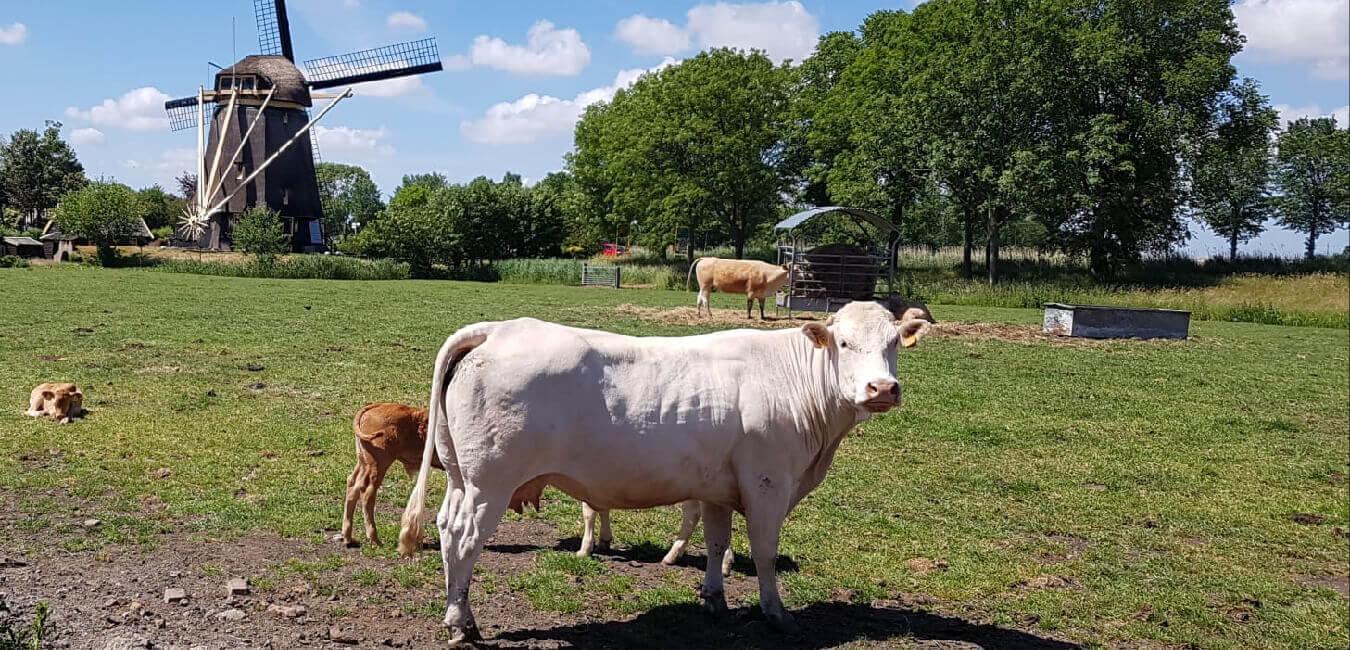 Kouwenhoven Vlees